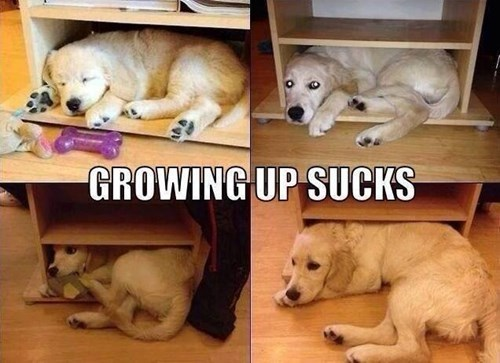 shrink,dogs,growing up,bookcasee