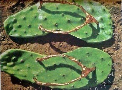 wtf,cactus,sandals,funny