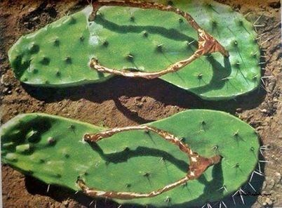 wtf cactus sandals funny - 7846306048