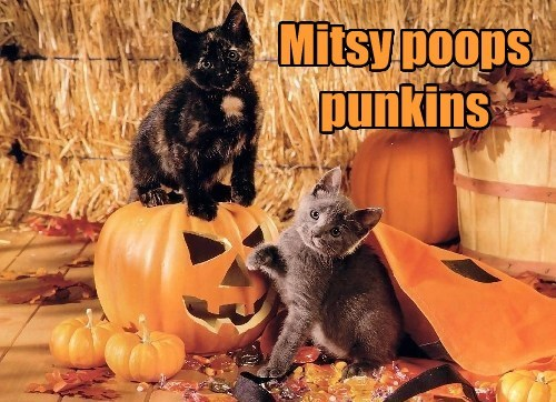 Mitsy poops punkins