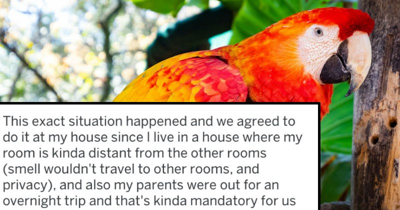 FAIL pets birds cringe ridiculous tifu parrot - 7846661