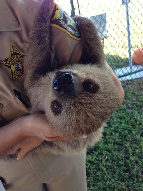 cute,coast guard,sloths