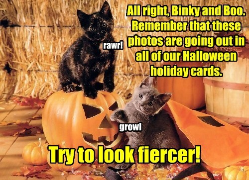 All right, Binky and Boo. Remember that these photos are going out in all of our Halloween holiday cards. Try to look fiercer! rawr! growl