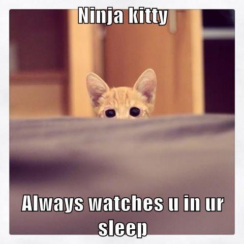 Ninja kitty  Always watches u in ur sleep