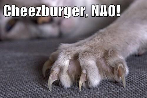 Cheezburger Image 7846764800