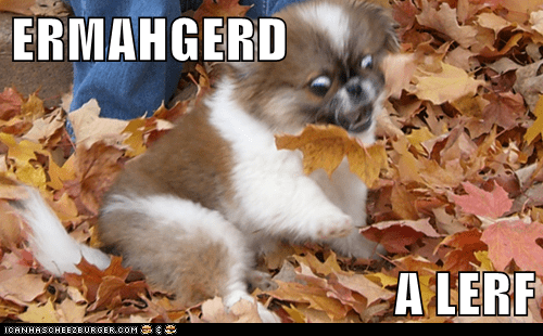 autumn Ermahgerd leaves fall - 7846832640