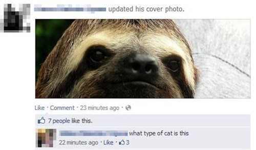 cover photos sloths Cats - 7846952192