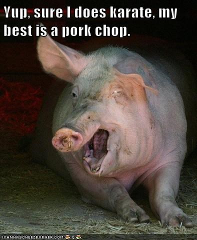 pork chop,karate,pig