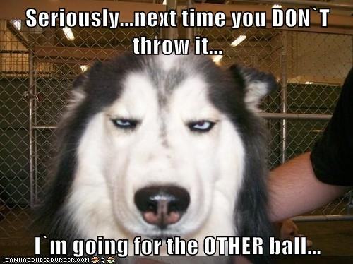 ouch fetch balls dogs - 7847153920