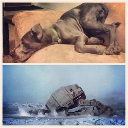 dogs,star wars,at at