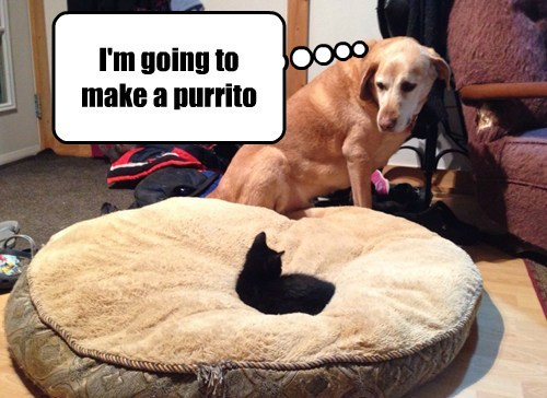 dogs purr burrito cute Cats
