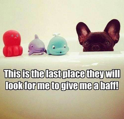bath cute dogs toys hide - 7847330816