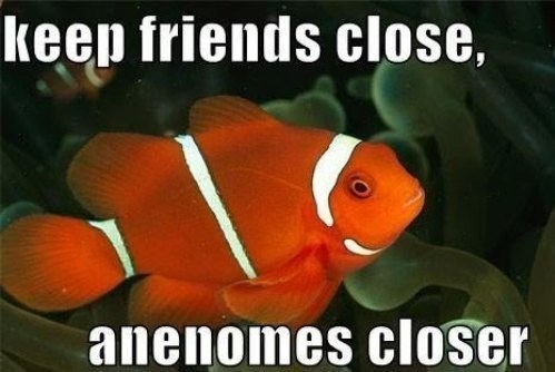 clown friends anenomes puns clown fish