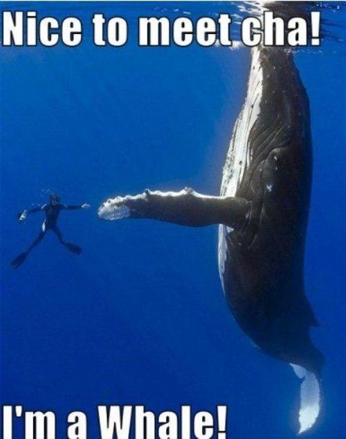 handshake scuba diver whales