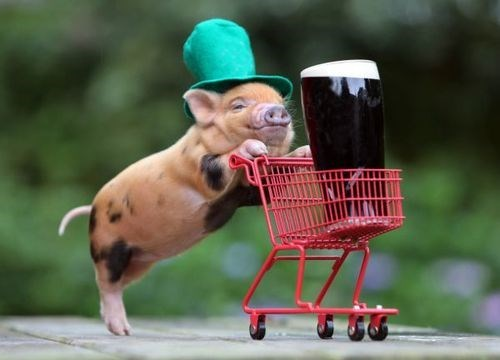beer wtf pig leprechauns funny - 7847485440