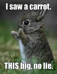 bunnies no lie carrot cute - 7847492864