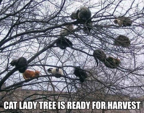 Fluffy cute tree harvest Cats - 7847579904