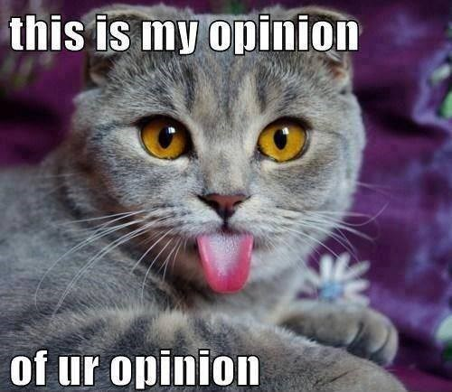 opinion disgust Cats