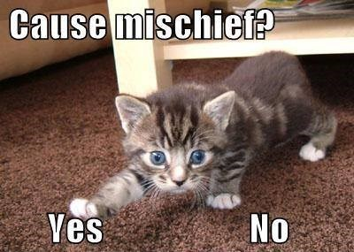 kitten,cute,yes or no,mischief,Cats