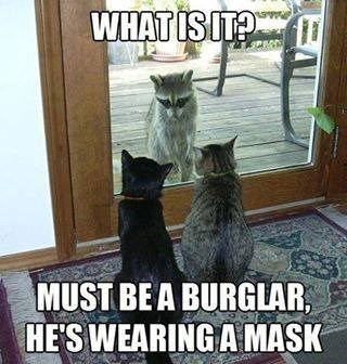 mask,raccoons,Cats,burglar