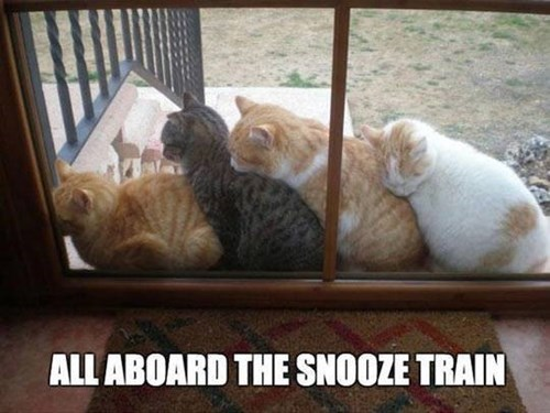 cuddle snooze Cats train sleeping