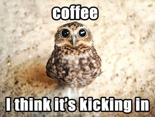 caffeine,owls,coffee