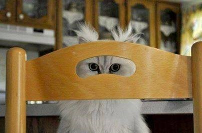 chair disguise mask Cats - 7847715840