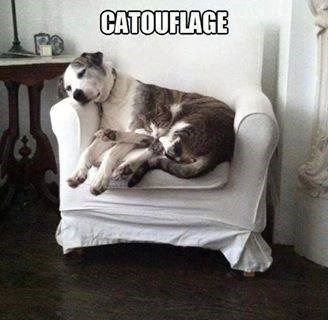 dogs,snuggle,camo,teamwork,Cats