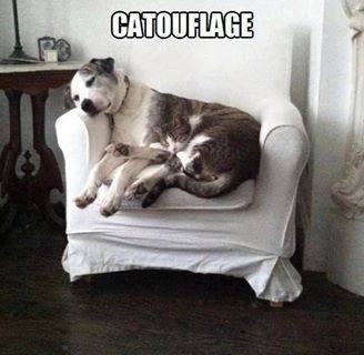 snuggle camo teamwork Cats - 7847721472