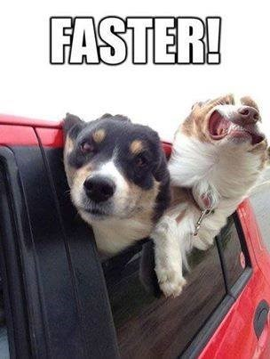 fun,dogs,car ride,faster