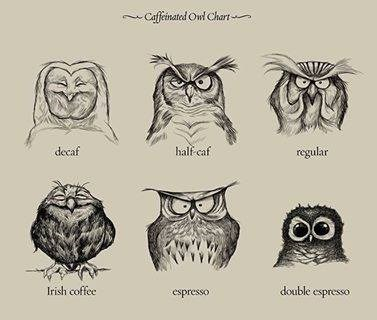 caffeine,charts,owls,coffee,web comics