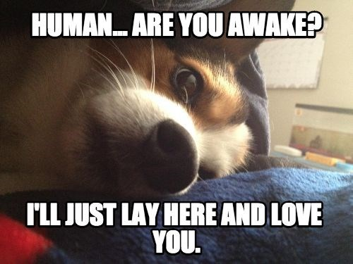 puppies overly attached animals - 7847790336