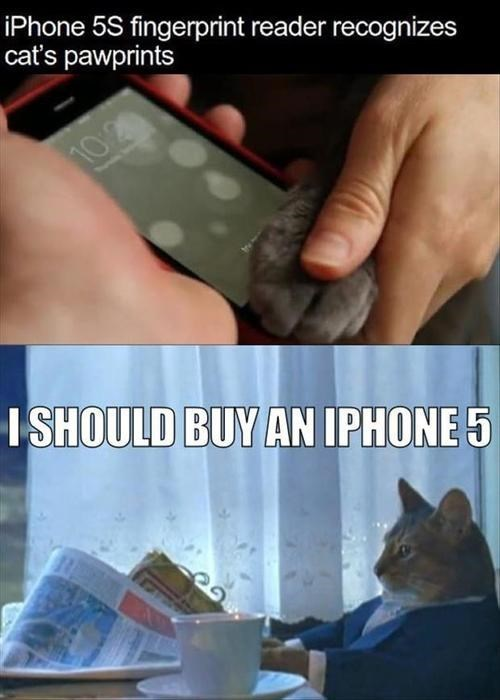 i should buy a boat Cats funny web comics iphone - 7848007936