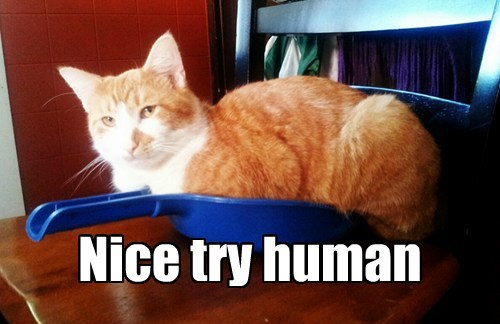 Nice Try Human Lolcats Lol Cat Memes Funny Cats Funny Cat Pictures With Words On Them Funny Pictures Lol Cat Memes Lol Cats