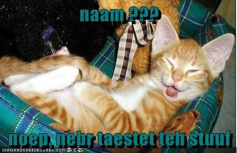 Cheezburger Image 7848626176