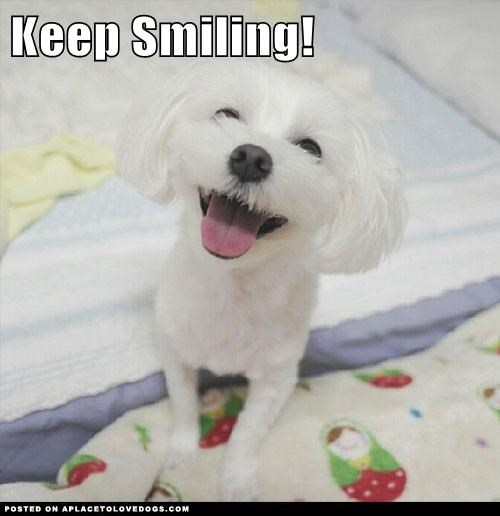 dogs cute happy smile - 7849034496