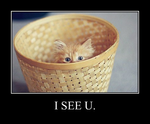 Cheezburger Image 7849288448