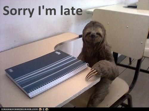 school,sloths,late,funny