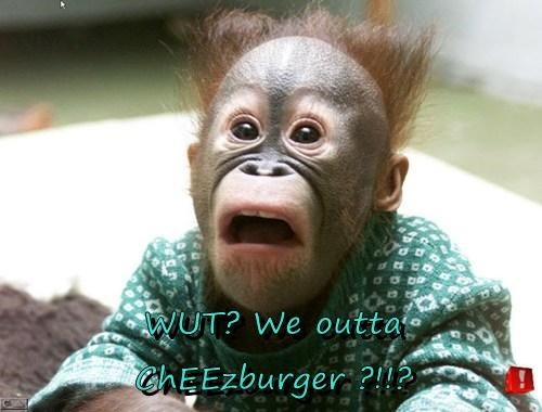 Cheezburger Image 7849562112