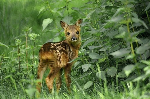 cute fawns trail greenery - 7849738240