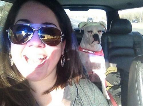 dogs grumpy sun happy smile - 7851191040
