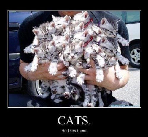 kitten wtf Cats funny - 7851300096