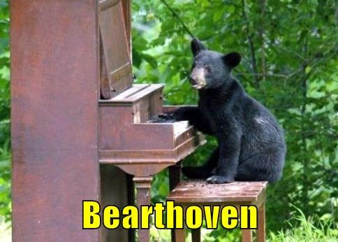 Beethoven piano bears funny