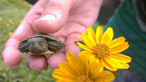 baby turtle,cute,grumpy,Flower