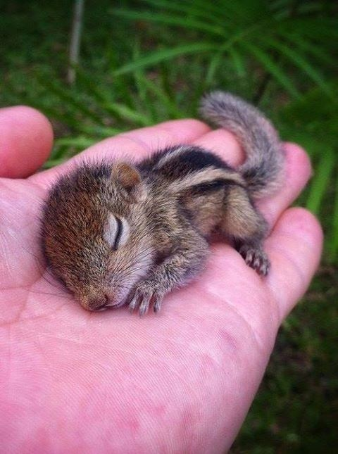 baby squirrel,cute,sleep,hand