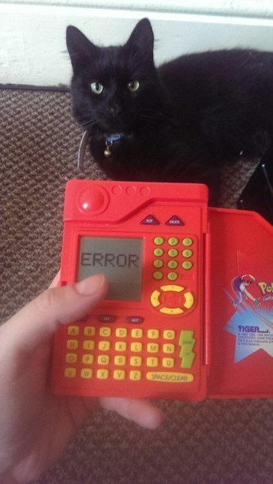 pokedex,Pokémon,IRL,Cats