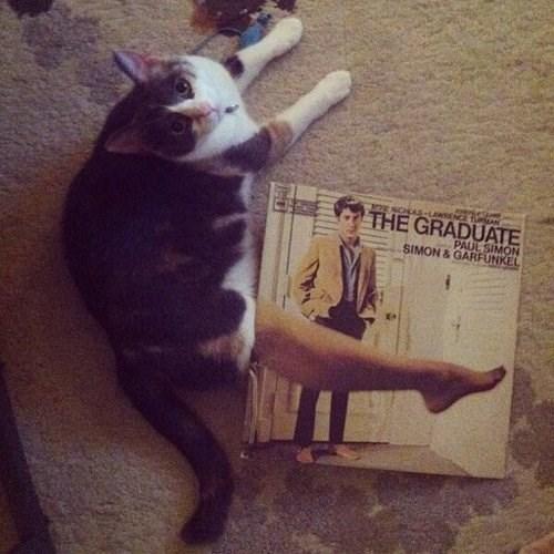 album Cats funny the graduate - 7852868096