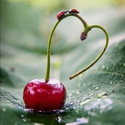 heart,cherry,love,lady bugs