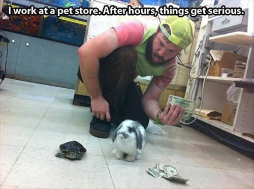 turtles,dice,gambling,pet store,rabbits