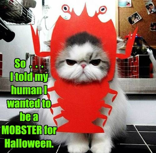 costume,halloween,lobsters,claws,Cats